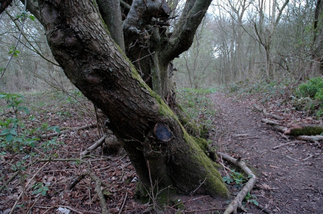 Louise Tree