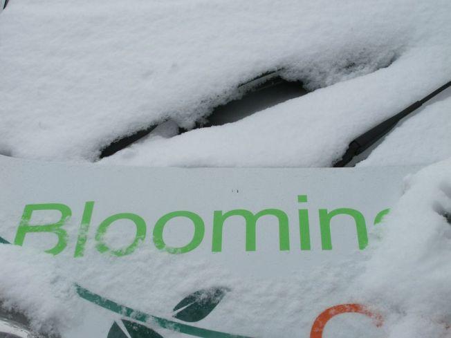 Bloomin Ek